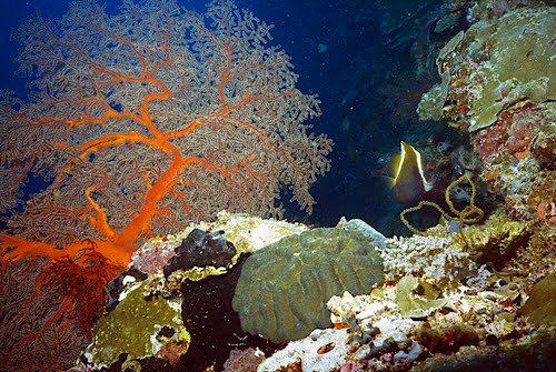 帛琉群岛    1_图1-7