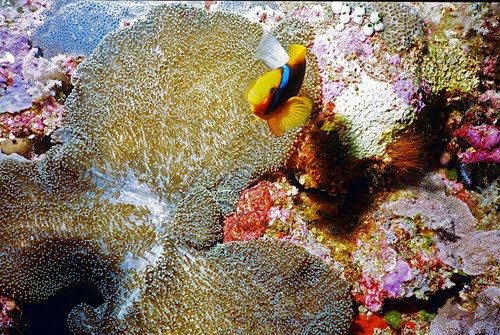 帛琉群岛    1_图1-10