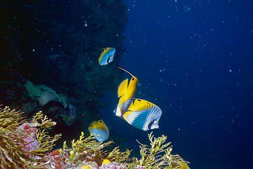 帛琉群岛    1_图1-12