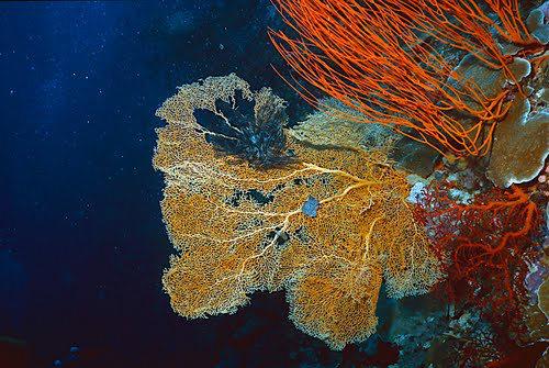 帛琉群岛    1_图1-13