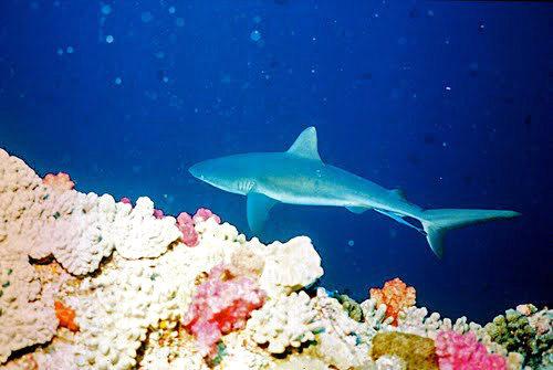 帛琉群岛    1_图1-14