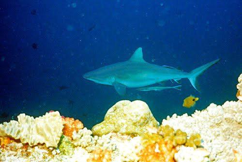 帛琉群岛    1_图1-15