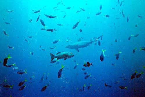 帛琉群岛    1_图1-17