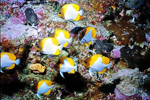 帛琉群岛    1_图1-18
