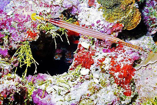 帛琉群岛    1_图1-19