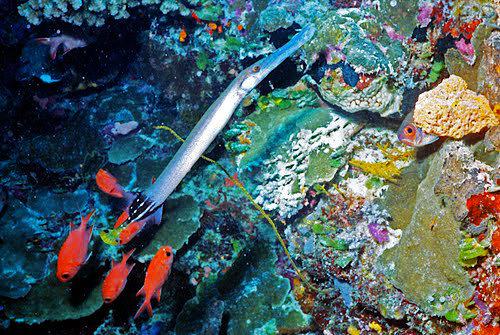 帛琉群岛    1_图1-20