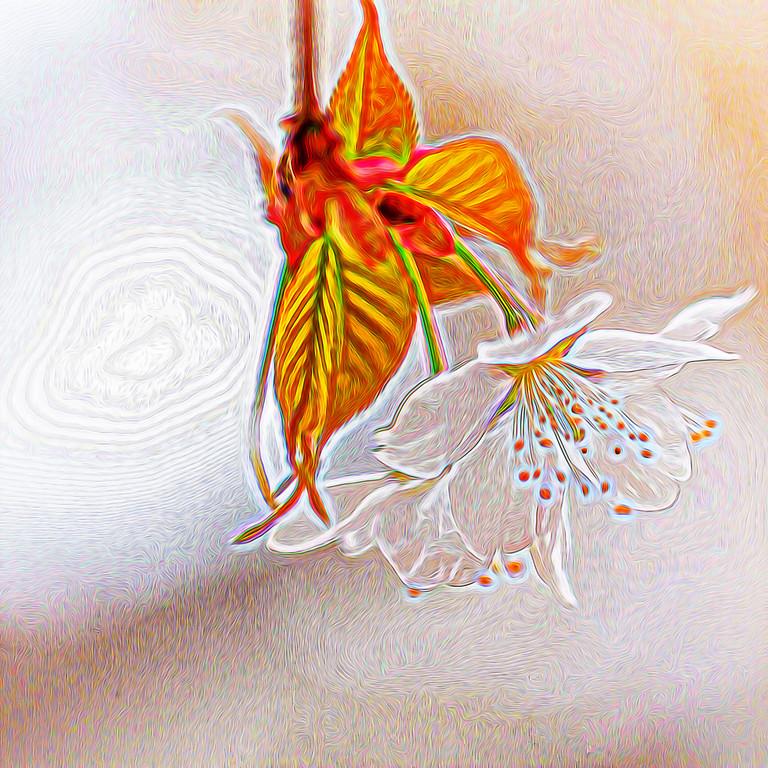 【自由鸟】改变,不需要理由_图1-4