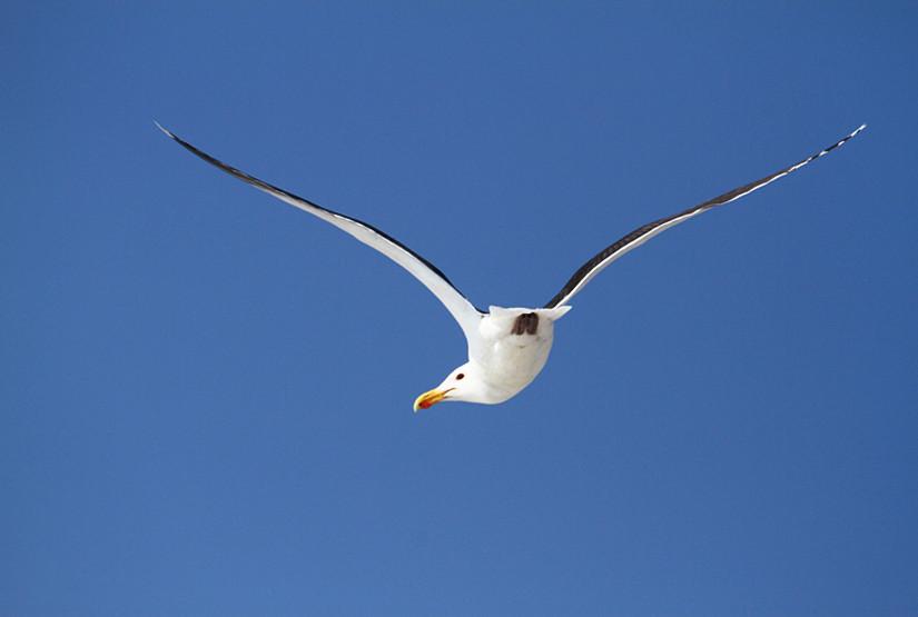 【田螺摄影】周末在长滩拍海鸥