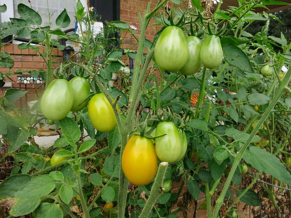 菜园子--09_图1-5