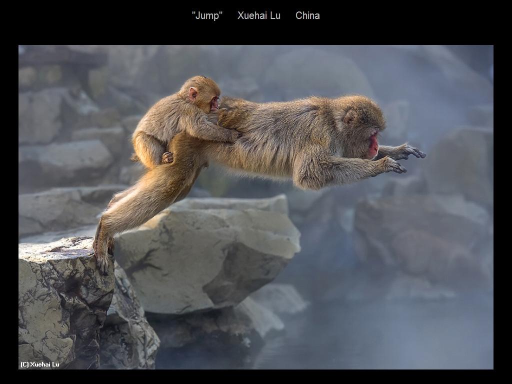 敬请欣赏纽约摄影学会2016年沙龍數碼自然組部分獲獎作品_图1-19