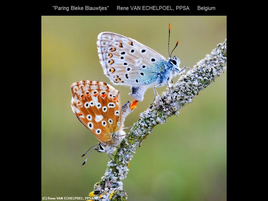 敬请欣赏纽约摄影学会2016年沙龍數碼自然組部分獲獎作品_图1-18