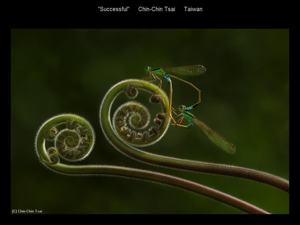 敬请欣赏纽约摄影学会2016年沙龍數碼自然組部分獲獎作品_图1-2