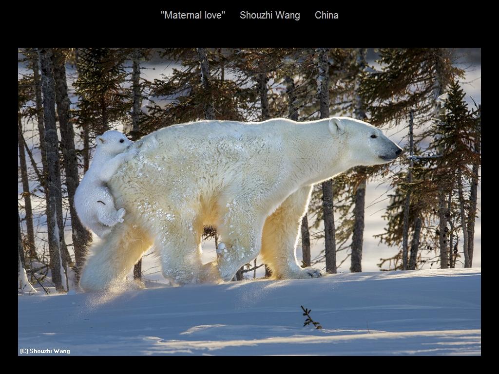 敬请欣赏纽约摄影学会2016年沙龍數碼自然組部分獲獎作品_图1-14