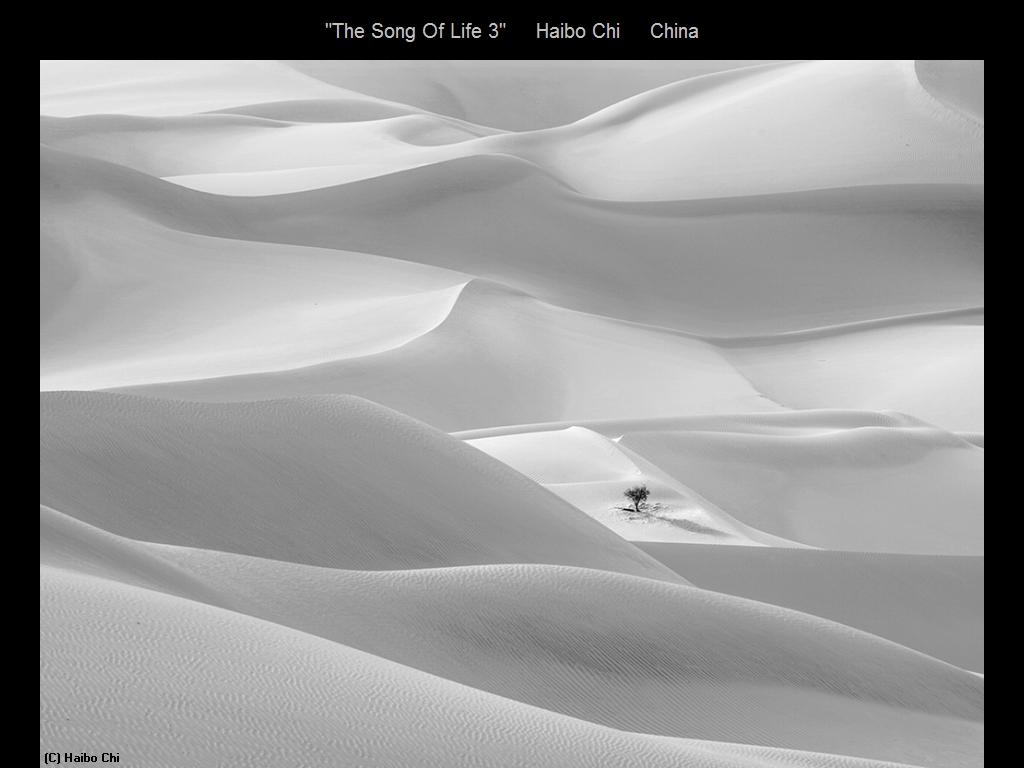 敬请欣赏纽约摄影学会2016年沙龍數碼單色自由題組獲獎作品_图1-3