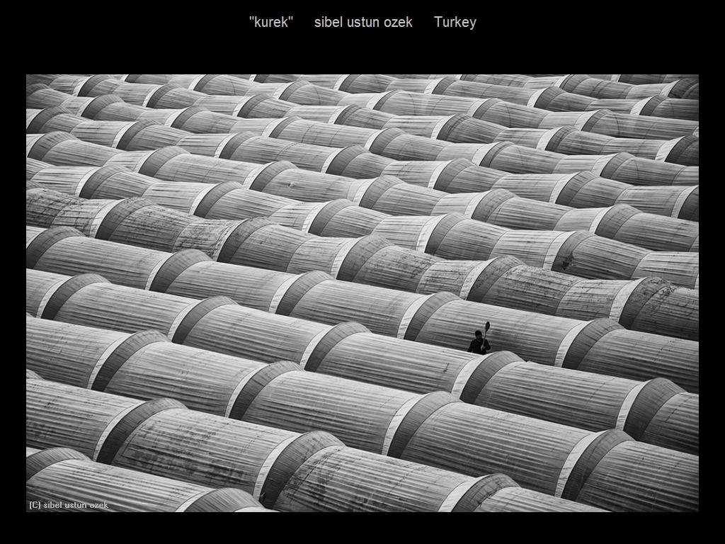 敬请欣赏纽约摄影学会2016年沙龍數碼單色自由題組獲獎作品_图1-5