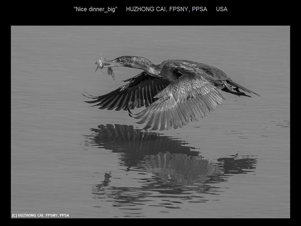 敬请欣赏纽约摄影学会2016年沙龍數碼單色自由題組獲獎作品_图1-18