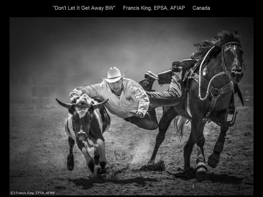 敬请欣赏纽约摄影学会2016年沙龍數碼單色自由題組獲獎作品_图1-17