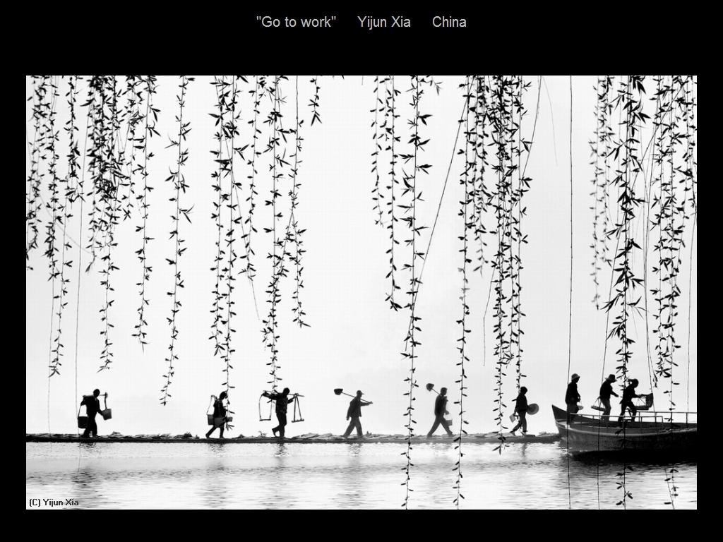 敬请欣赏纽约摄影学会2016年沙龍數碼單色自由題組獲獎作品_图1-14