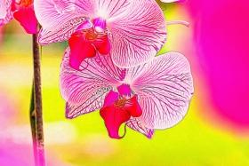 【自由鸟】心静花则香