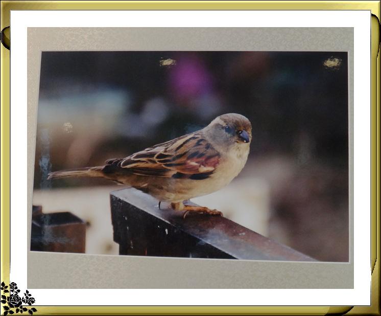 纽约优展摄影俱乐部2016年摄影展(9月21日—10月8日)_图1-9
