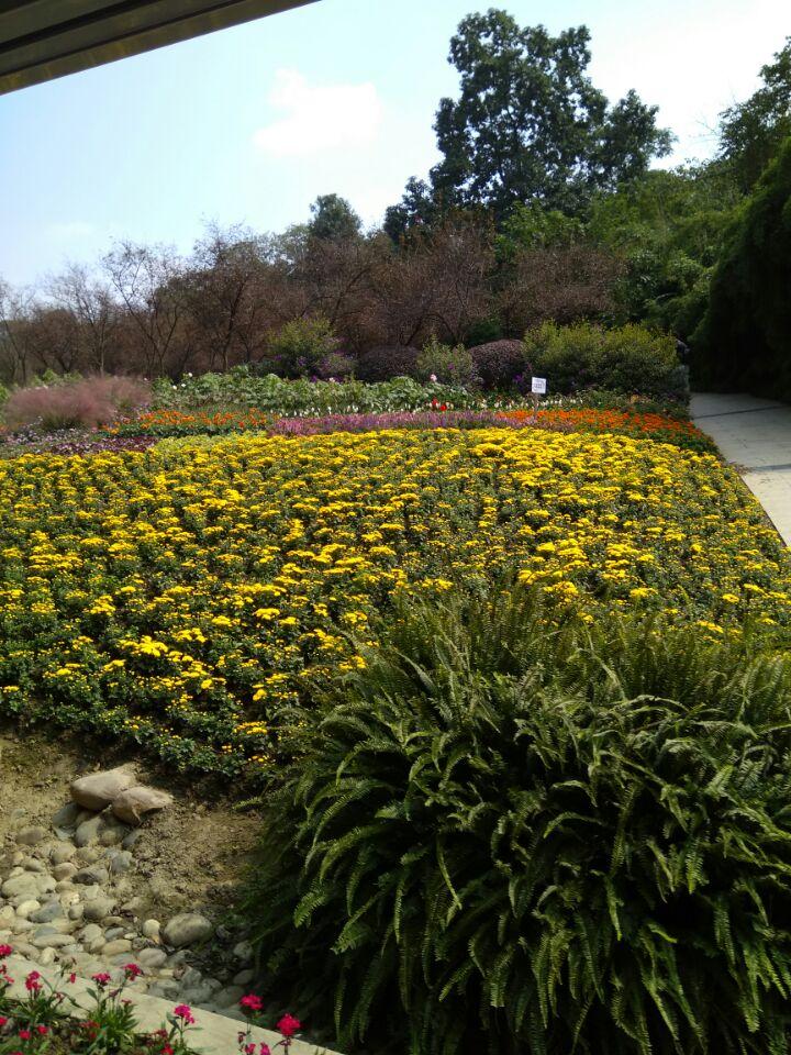 成都植物园能满足你一切悠适怀古的臆想_图1-4