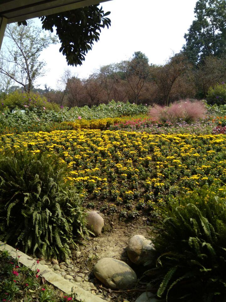 成都植物园能满足你一切悠适怀古的臆想_图1-5
