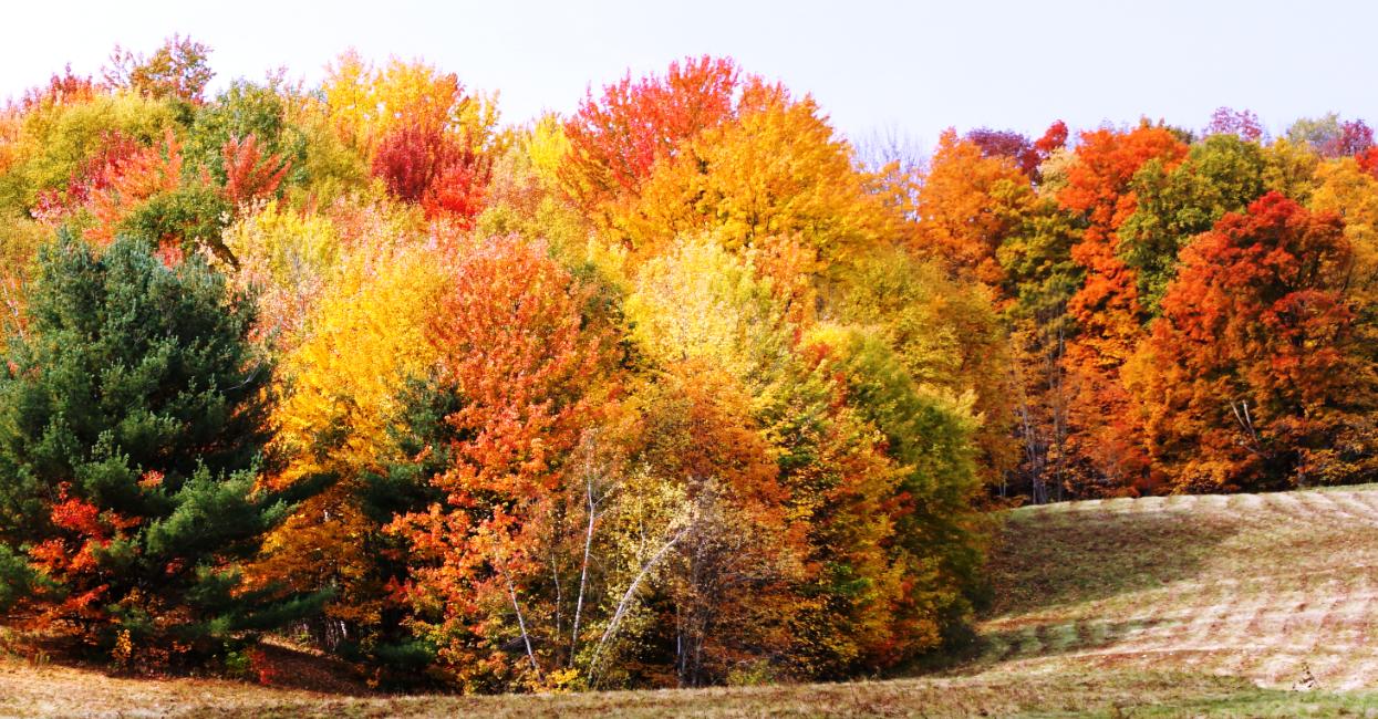 Vermount - 美国大农村的秋天好美!_图1-6