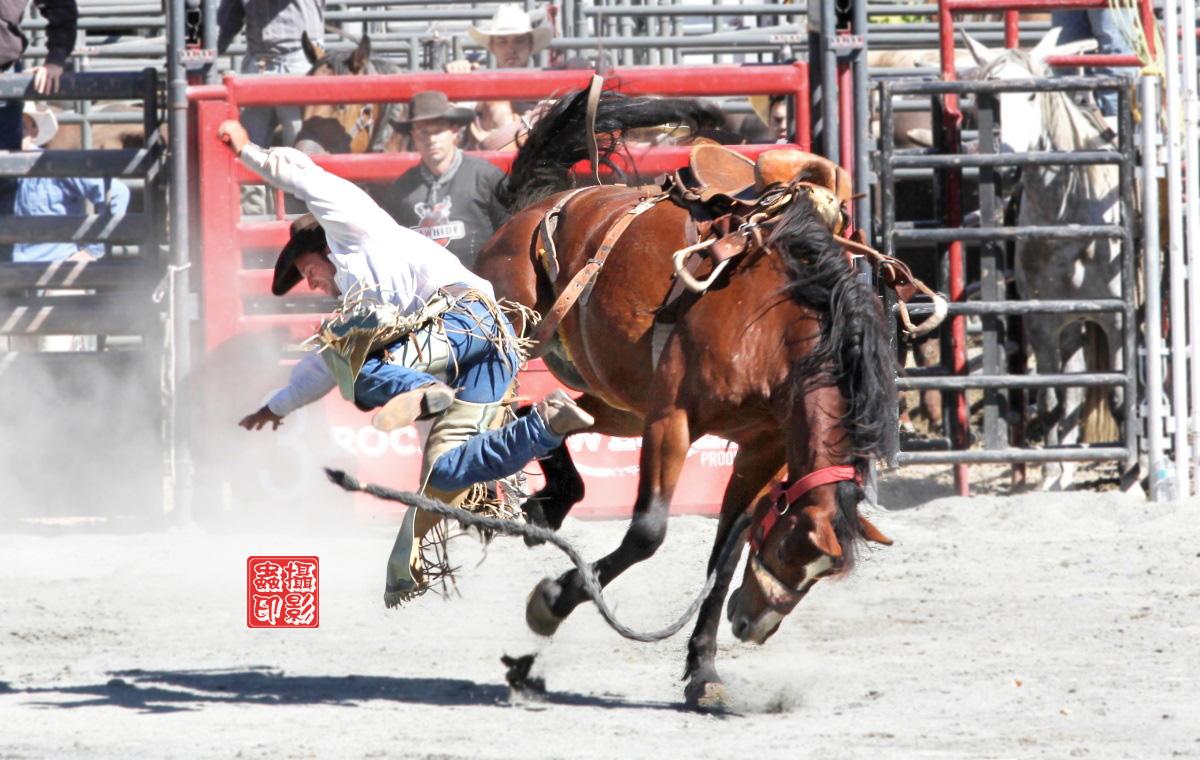 【攝影蟲】癫馬狂牛盡顯美國冒險精神_图1-12