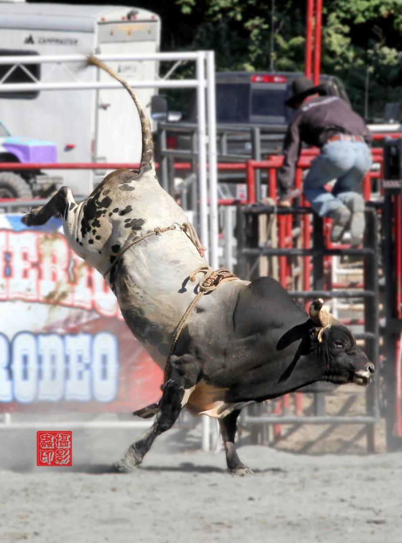 【攝影蟲】癫馬狂牛盡顯美國冒險精神_图1-23