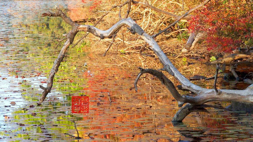 【攝影蟲】紐約七湖徑秋色已濃_图1-15