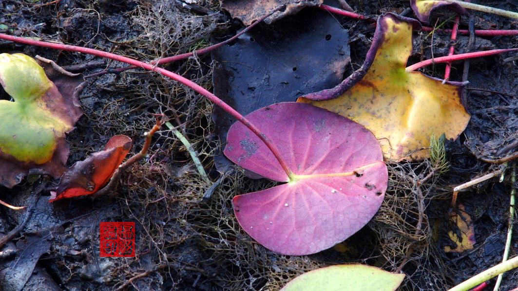 【攝影蟲】紐約七湖徑秋色已濃_图1-18