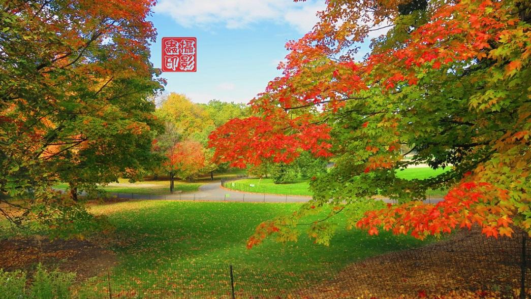 【攝影蟲】家門口的秋色(中央公園初秋)_图1-1