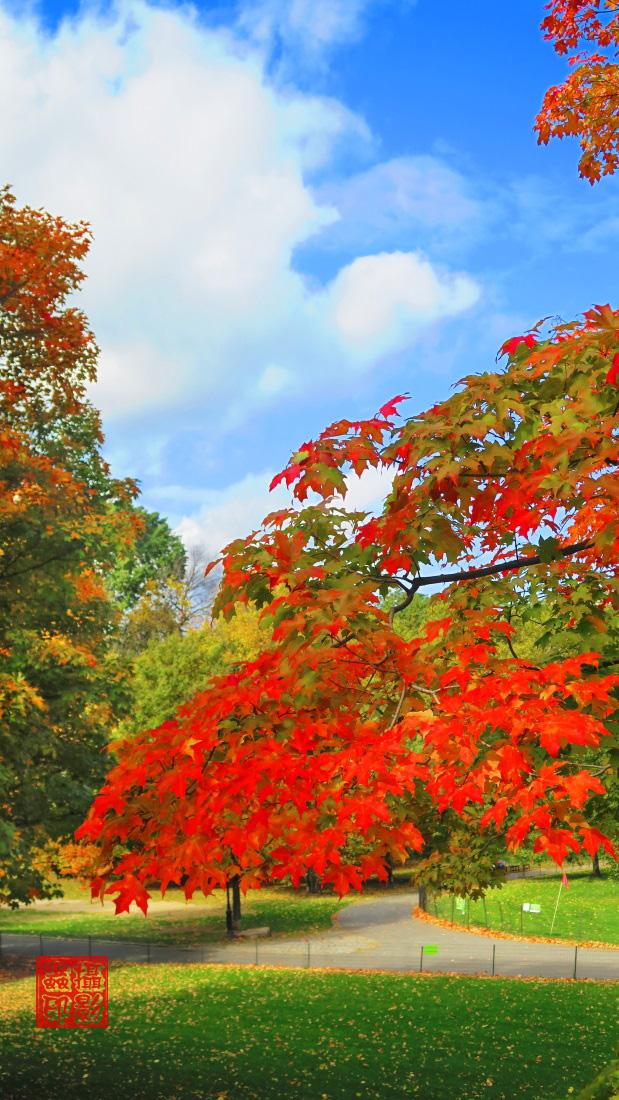 【攝影蟲】家門口的秋色(中央公園初秋)_图1-2