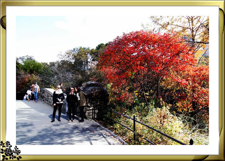 中央公园59街进口秋色(11月4日拍摄)_图1-12