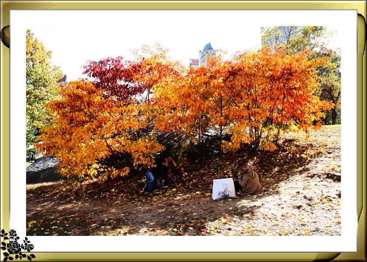 中央公园59街进口秋色(11月4日拍摄)_图1-13