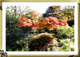 凯西娜公园秋色正浓(16-11-08摄影)
