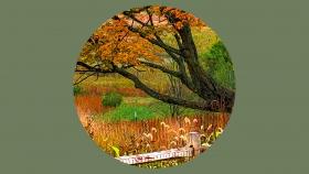 【自由鸟】慢慢地走过初秋,细细地品味人生