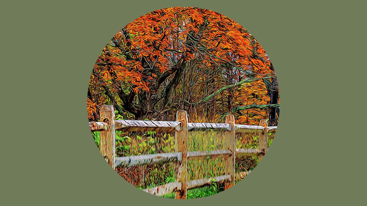 【自由鸟】慢慢地走过初秋,细细地品味人生_图1-2