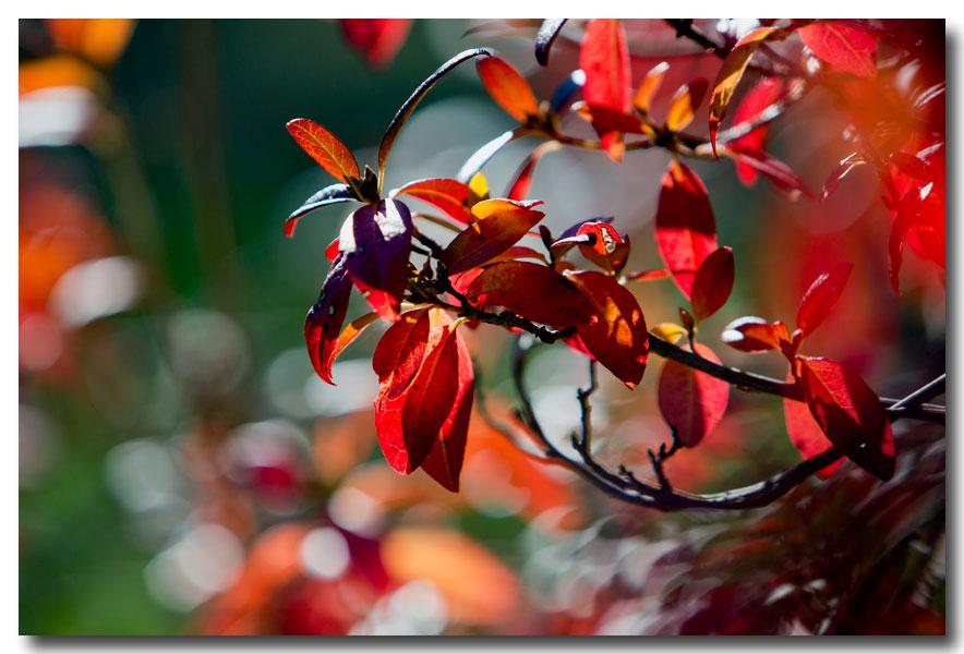 《酒一船摄影》:纽约长岛植物园揽秋_图1-1