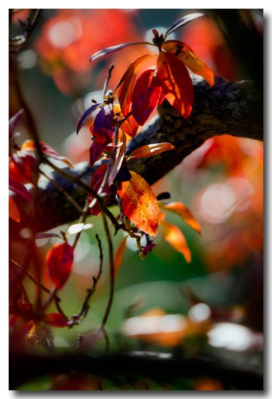 《酒一船摄影》:纽约长岛植物园揽秋_图1-16