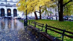 【田螺手机摄影】雨天城市的枫景