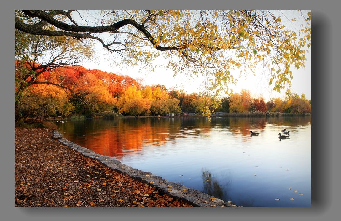 纽约展望公园秋色_图1-2