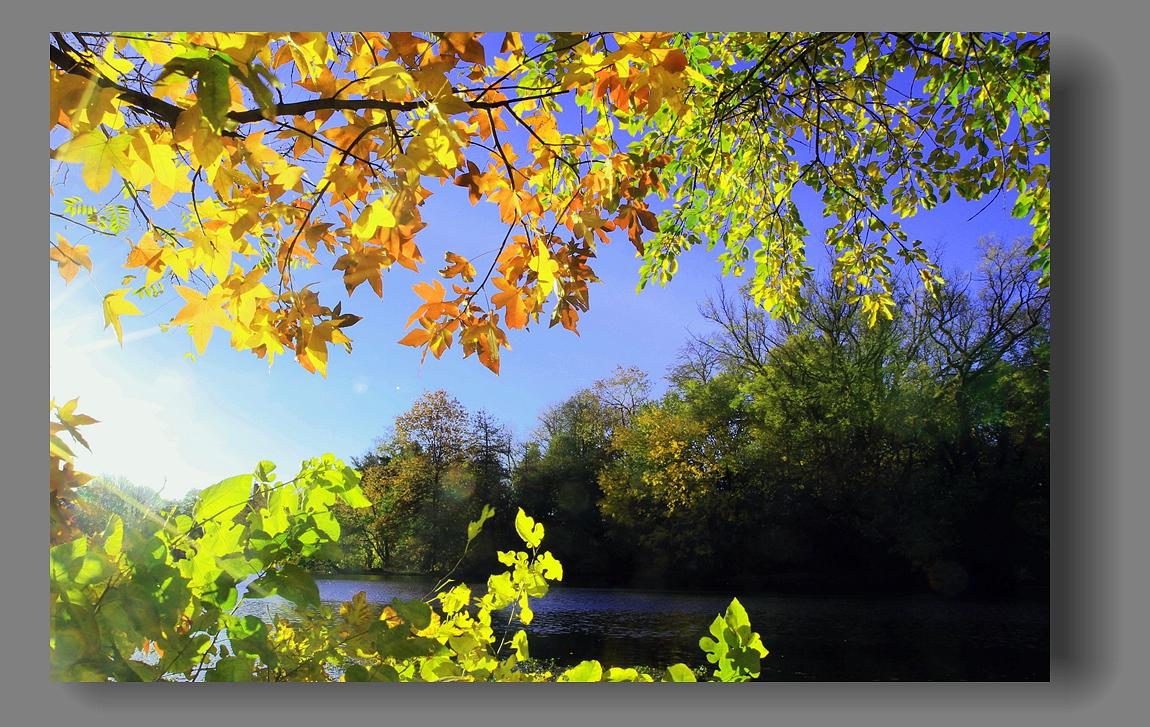 纽约展望公园秋色_图1-17