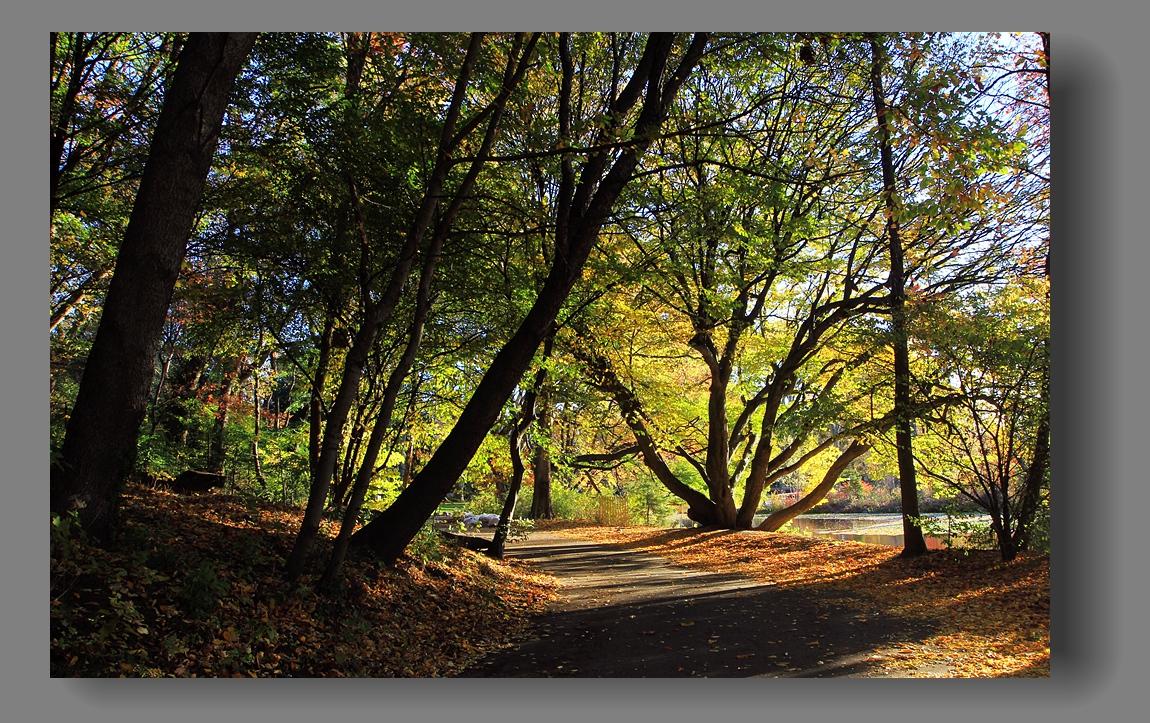 纽约展望公园秋色_图1-14