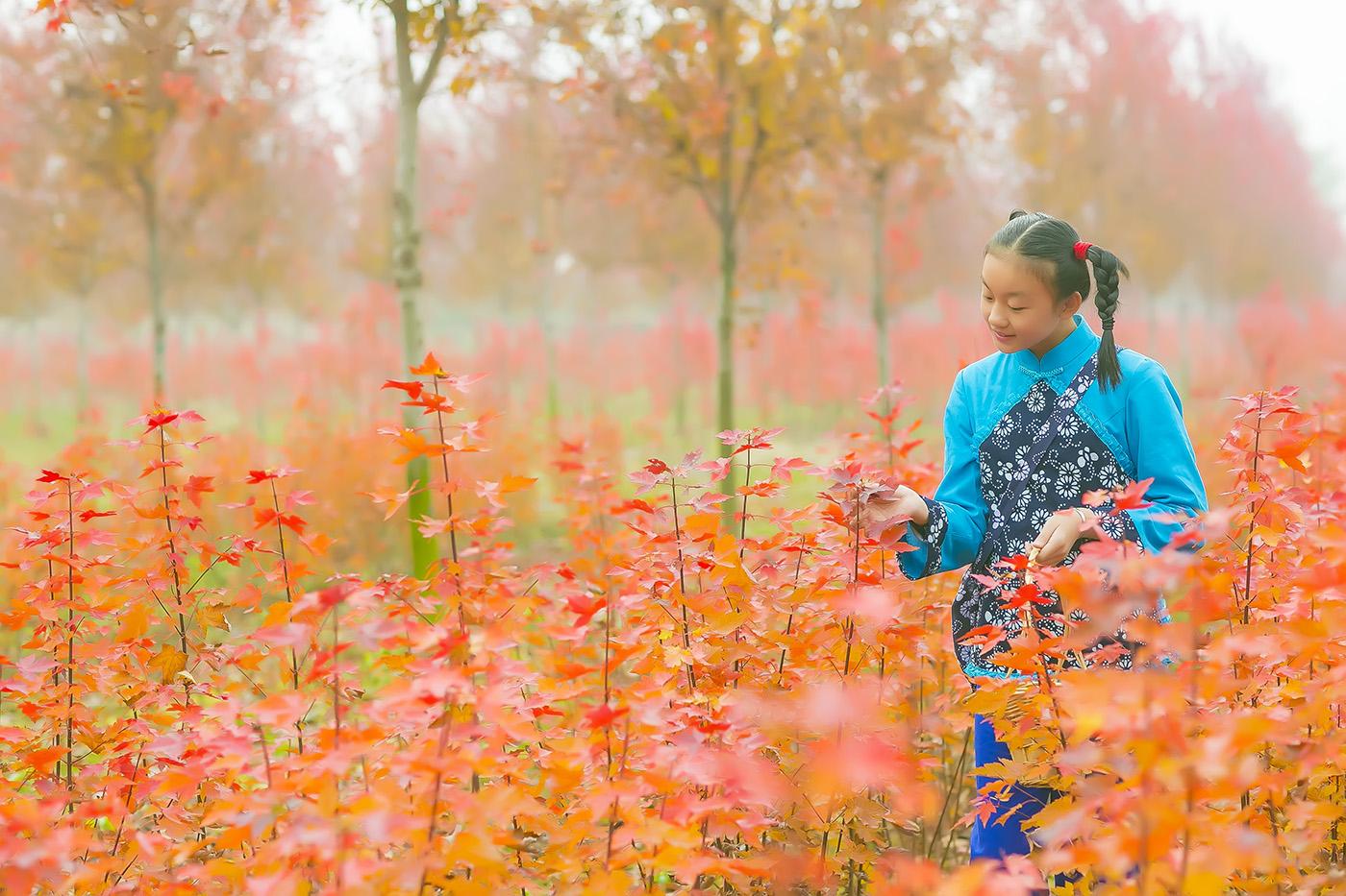 沂蒙山区竟然有这么一片童话般的树林 沂蒙小精灵火红的童年来袭 ..._图1-11