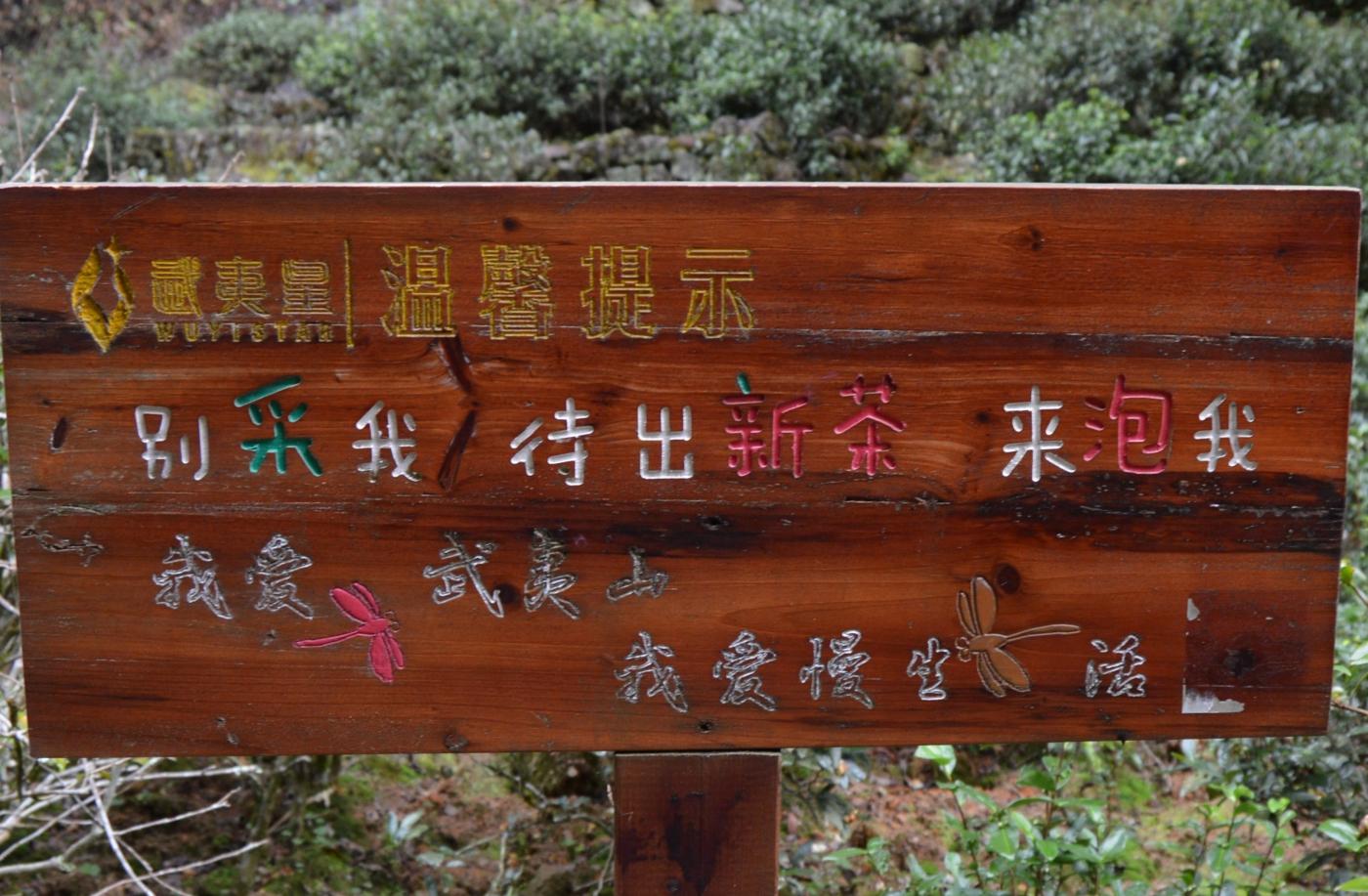 武夷山—那山、那水、那茶香_图1-29