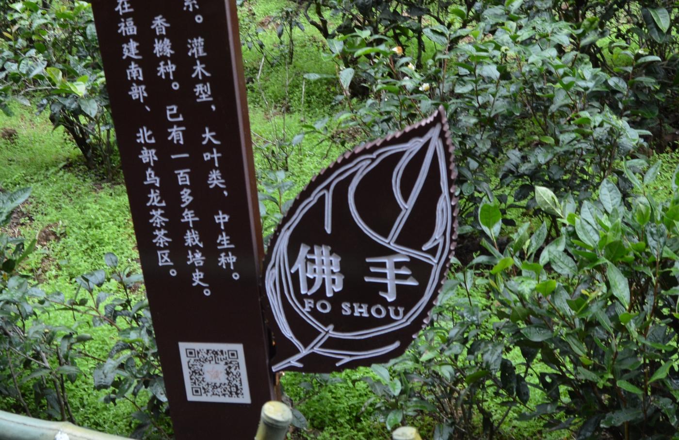 武夷山—那山、那水、那茶香_图1-30