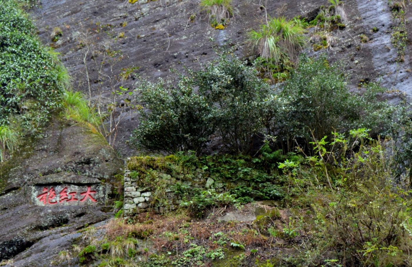武夷山—那山、那水、那茶香_图1-32