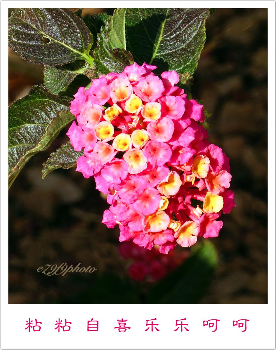 【晓鸣摄影】花卉_图1-1