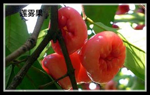 【原创】盘点奇异水果(二)_图1-9